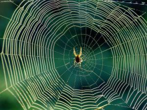 waiting_spider_web